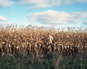 cornfieldjpg